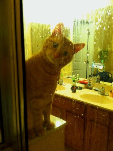 Creepy Moments Every Cat-Owner Knows