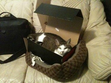 Cat in box in cat bed