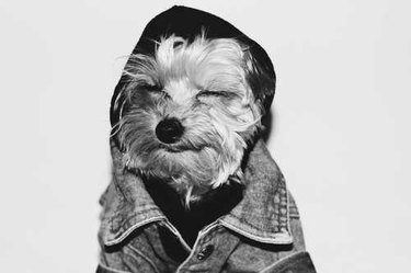 Black and white photo of a dog in people clothes
