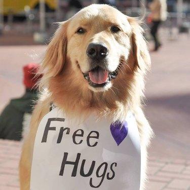Free Hugs Dog