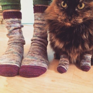 Cat wearing wool socks stands next to person wearing matching socks