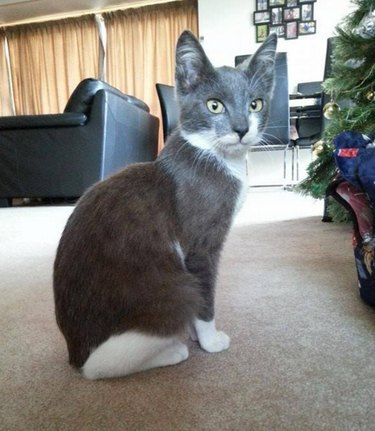 Dennis the kitten is settled in his foster home