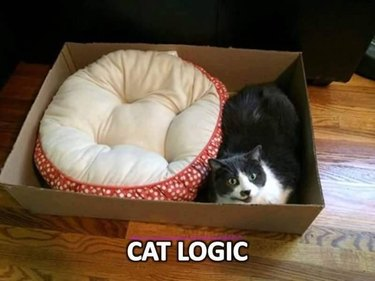 Cat prefers box to bed meme