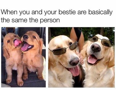 Matching puppies compared to matching dogs in sunglasses.