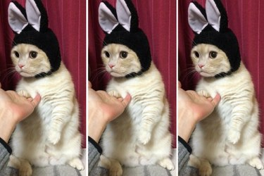 Cat Wearing Bunny Ears Is Pretty Much Everythhing