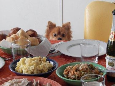 Dog at Thanksgiving table