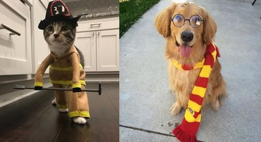 21 pets with better Halloween costumes than you
