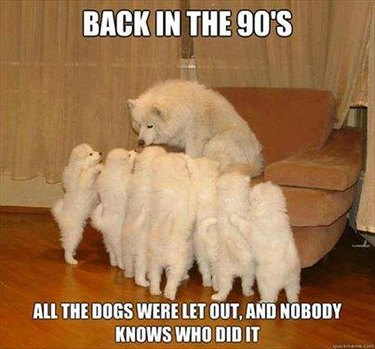"""Dog meme with a dog surrounded by puppies """"Back in the 90's all the dogs were let out, and nobody knows who did it."""""""