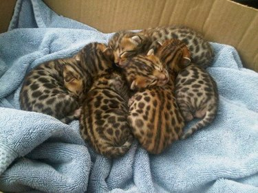17 Sleepiest Kitties To Ever Take A Nap