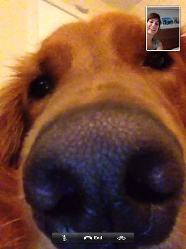 Closeup of dog's face in video chat.
