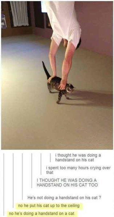 Here Are 20 Very Random and Hilarious Pictures of Animals Guaranteed to Make Your Day Better