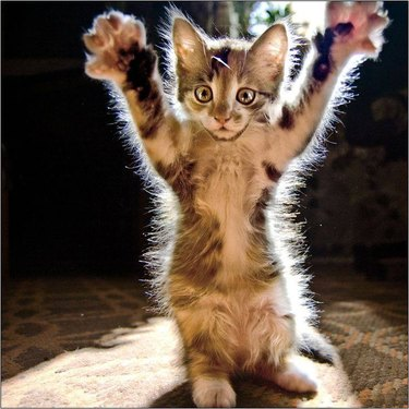 Paws Up Cat