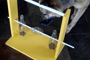 German shepherd solving DIY dog puzzle feeder.