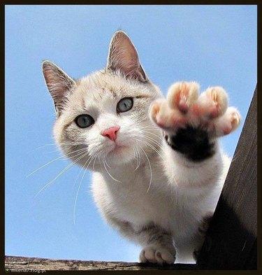 Reaching Cat