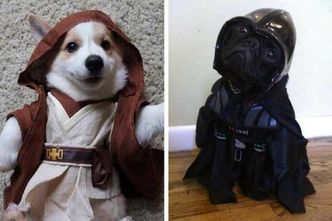 Dogue One: 12 Star Wars Dogs That Are One With The Force