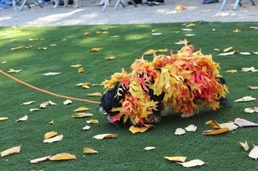 Dog dressed as a pile of leaves.