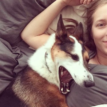 dogs, yawn, contagious