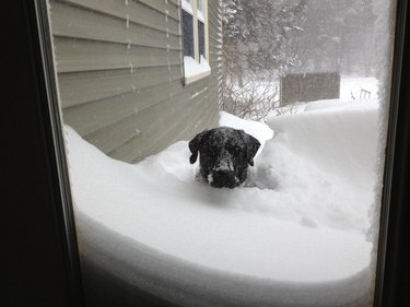 Dog covered in snow looking through window.