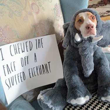 29 Greatest Dog Shamings Of All Time