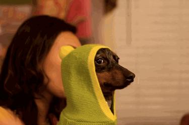 Dog throws shade