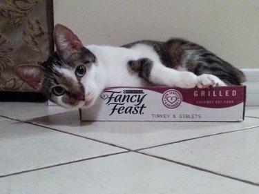 Cat laying in Fancy Feast box