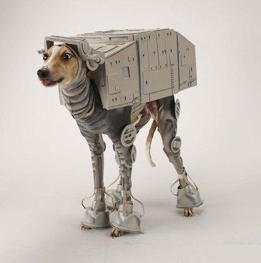 Bones Mello, the AT-AT Walker Star Wars dog