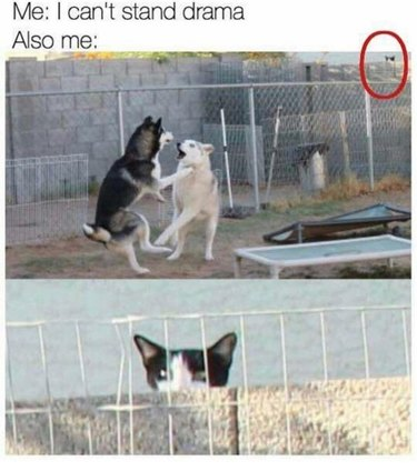 16 Funniest Pet Reactions The World Has Ever Seen
