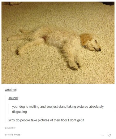 Just 22 hilarious Tumblr posts about dogs