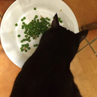 Cat eating peas