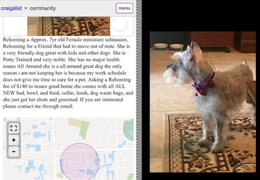 Hed: Pet Flipping Is a Thing and It's Terrible