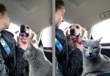 Cat is not impressed by dog.