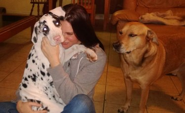 Woman cuddling puppy while older dog looks on disdainfully