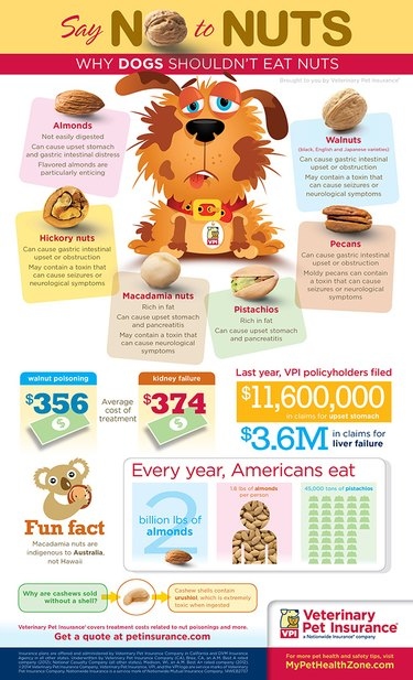 Veterinary Pet Insurance infographic: dogs and nuts