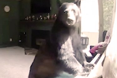Black Bear Discovers Her True Passion After Breaking Into Musician's Home