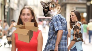 Distracted boyfriend meme but with a cat staring at a box as the cat tree stares on angrily