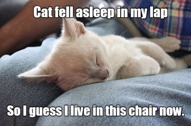 Cat fell asleep in my lap, so I guess I live in this chair now.