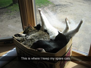 Several cats sleeping in a box on a windowsill. Caption: This is where I keep my spare cats
