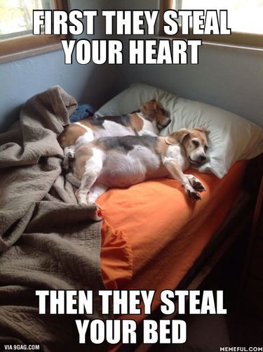 Dogs in a bed.