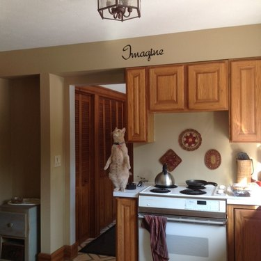 Cat standing on two feet, staring at kitchen ceiling.