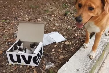 This Dog Found a Mysterious Box While Hiking and It Was Filled with the BEST Surprise