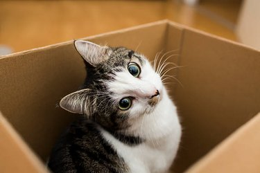 Cat Takes a Nap in a Box, Accidentally Gets Mailed Across Country
