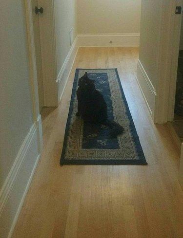Cat looks down a hallway.