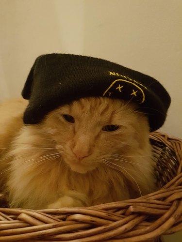 Cat in Nirvana beanie