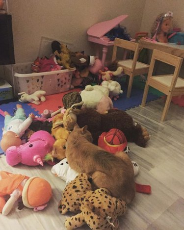 Only expert cute spotters will be able to find all of the cats hidden in these pictures