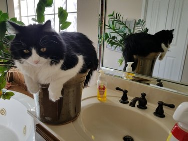 Cat sitting on sink