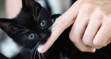 Kitten biting finger