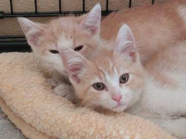 Paws right for love: mobile dating app brings sibling cats back together