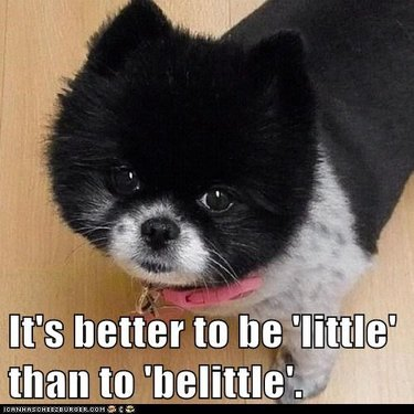 Little dog with caption