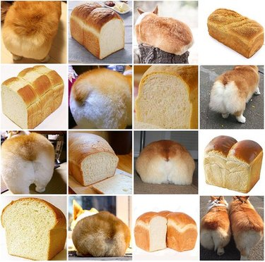 Photo set of loaves of bread compared to Corgi butts.