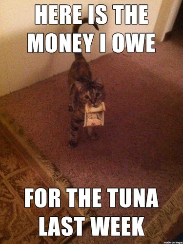 """Cat holding money with caption: """"Here is the money I owe for the tuna last week."""""""